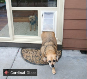 Pet Door Products - Des Moines, Iowa